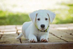 Betriebshaftpflichtversicherung Hundesalon