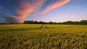 Betriebshaftpflichtversicherung Landwirtschaft