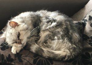 Betriebshaftpflichtversicherung Tierarzt